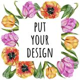 Ζωηρόχρωμη θερινή τουλίπα Floral βοτανικό λουλούδι Τετράγωνο διακοσμήσεων συνόρων πλαισίων Στοκ φωτογραφία με δικαίωμα ελεύθερης χρήσης