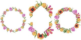 Ζωηρόχρωμη θερινή τουλίπα Floral βοτανικό λουλούδι Τετράγωνο διακοσμήσεων συνόρων πλαισίων Στοκ εικόνα με δικαίωμα ελεύθερης χρήσης