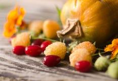 Ζωηρόχρωμη διακόσμηση φθινοπώρου των κολοκυθών, των κίτρινων σμέουρων, dogwood και marigold Στοκ Εικόνες