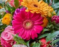 Ζωηρόχρωμη κινηματογράφηση σε πρώτο πλάνο λουλουδιών μαργαριτών gerber Στοκ Εικόνα