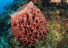 Ζωηρόχρωμη κοραλλιογενής ύφαλος Στοκ Φωτογραφία
