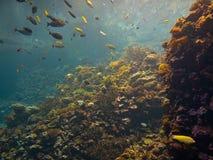 ζωηρόχρωμη κοραλλιογενής ύφαλος Στοκ Εικόνες