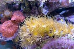Ζωηρόχρωμη κοραλλιογενής ύφαλος και υδρόβιες εγκαταστάσεις αλγών στοκ εικόνες με δικαίωμα ελεύθερης χρήσης