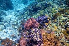 Ζωηρόχρωμη κοραλλιογενής ύφαλος με τα σκληρά κοράλλια στο κατώτατο σημείο του τροπικού s Στοκ εικόνα με δικαίωμα ελεύθερης χρήσης