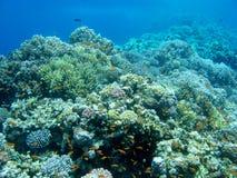 Ζωηρόχρωμη κοραλλιογενής ύφαλος με τα anthias ψαριών στην τροπική θάλασσα, υποβρύχια Στοκ εικόνα με δικαίωμα ελεύθερης χρήσης