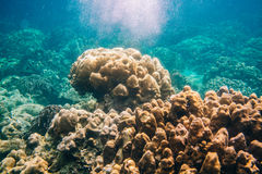 Ζωηρόχρωμη κοραλλιογενής ύφαλος στο νησί Lipe στην Ταϊλάνδη Στοκ εικόνα με δικαίωμα ελεύθερης χρήσης
