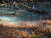 Ζωηρόχρωμη λίμνη σε ένα τροπικό δάσος στοκ εικόνες