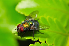 ζωηρόχρωμη μύγα στοκ φωτογραφίες με δικαίωμα ελεύθερης χρήσης