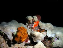 ζωηρόχρωμη νύχτα κοραλλιών Στοκ φωτογραφίες με δικαίωμα ελεύθερης χρήσης