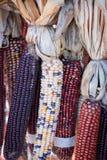 Ζωηρόχρωμη ξηρά δέσμη καλαμποκιού για τη διακόσμηση συγκομιδών Στοκ Φωτογραφία