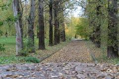 Ζωηρόχρωμη ομαλή αλέα μεταξύ των δέντρων το φθινόπωρο Στοκ Εικόνες