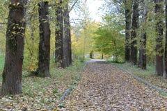 Ζωηρόχρωμη ομαλή αλέα μεταξύ των δέντρων το φθινόπωρο Στοκ φωτογραφία με δικαίωμα ελεύθερης χρήσης