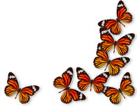 Ζωηρόχρωμη πεταλούδα ανασκόπησης Στοκ Εικόνες