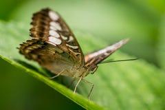 Ζωηρόχρωμη πεταλούδα ενάντια στα πράσινα φύλλα στοκ εικόνες