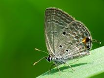 Ζωηρόχρωμη πεταλούδα στη χλόη στοκ φωτογραφία με δικαίωμα ελεύθερης χρήσης