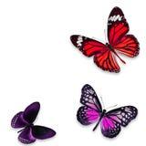 Ζωηρόχρωμη πεταλούδα Στοκ Εικόνες