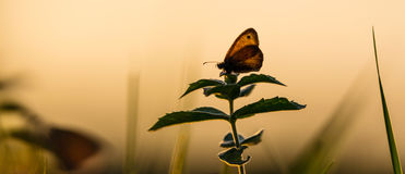 Ζωηρόχρωμη πεταλούδα σε ένα λιβάδι άνοιξη Στοκ Εικόνες