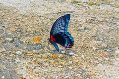 Ζωηρόχρωμη πεταλούδα στο συγκεκριμένο έδαφος Στοκ Εικόνες
