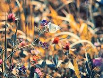 Ζωηρόχρωμη πεταλούδα  Στοκ εικόνες με δικαίωμα ελεύθερης χρήσης