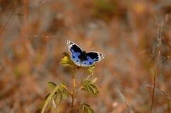 Ζωηρόχρωμη πεταλούδα Στοκ εικόνα με δικαίωμα ελεύθερης χρήσης