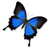 Ζωηρόχρωμη πεταλούδα Στοκ Φωτογραφίες