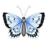Ζωηρόχρωμη ρεαλιστική πεταλούδα που απομονώνεται στο άσπρο υπόβαθρο Τοπ όψη Στοκ Φωτογραφία