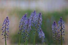 Ζωηρόχρωμη ρύθμιση των φρέσκων μπλε λουλουδιών άνοιξη Στοκ φωτογραφία με δικαίωμα ελεύθερης χρήσης
