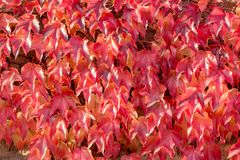 Ζωηρόχρωμη ρύθμιση 4 φύλλων φθινοπώρου στοκ φωτογραφίες με δικαίωμα ελεύθερης χρήσης
