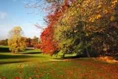 ζωηρόχρωμη σκηνή φθινοπώρο&ups Στοκ εικόνες με δικαίωμα ελεύθερης χρήσης