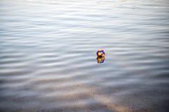 Ζωηρόχρωμη σφαίρα παιχνιδιών, ιδιότητες ποδοσφαιρικών παιχνιδιών που απεικονίζει στο κυματιστό νερό Στοκ Εικόνες