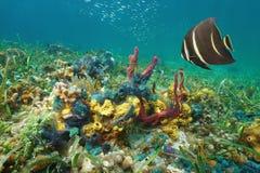 Ζωηρόχρωμη υποβρύχια θαλάσσια καραϊβική θάλασσα ζωής Στοκ Φωτογραφία