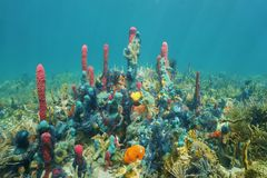 Ζωηρόχρωμη υποβρύχια θαλάσσια ζωή στο βυθό Στοκ Εικόνες