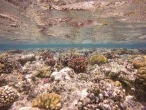 Ζωηρόχρωμη υποβρύχια κοραλλιογενής ύφαλος Στοκ εικόνες με δικαίωμα ελεύθερης χρήσης