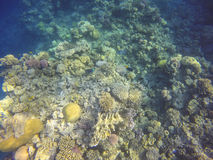 Ζωηρόχρωμη υποβρύχια κοραλλιογενής ύφαλος Στοκ Φωτογραφίες