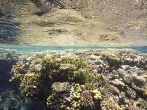 Ζωηρόχρωμη υποβρύχια κοραλλιογενής ύφαλος Στοκ Φωτογραφία