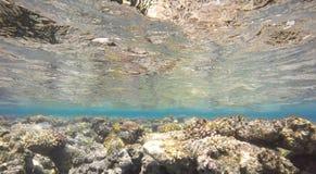 Ζωηρόχρωμη υποβρύχια κοραλλιογενής ύφαλος Στοκ εικόνα με δικαίωμα ελεύθερης χρήσης