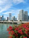 Ζωηρόχρωμη φωτογραφία οριζόντων κόλπων Biscayne λουλουδιών Στοκ φωτογραφία με δικαίωμα ελεύθερης χρήσης