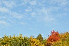 Ζωηρόχρωμοι δέντρα και ουρανός φθινοπώρου Στοκ εικόνα με δικαίωμα ελεύθερης χρήσης