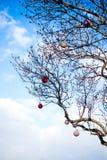 ζωηρόχρωμοι λαμπτήρες στο δέντρο Στοκ φωτογραφία με δικαίωμα ελεύθερης χρήσης