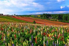 Ζωηρόχρωμοι λουλούδι και μπλε ουρανός Στοκ φωτογραφίες με δικαίωμα ελεύθερης χρήσης