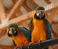 Ζωηρόχρωμοι παπαγάλοι Στοκ εικόνες με δικαίωμα ελεύθερης χρήσης