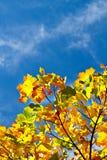 Ζωηρόχρωμοι φύλλα και μπλε ουρανός φθινοπώρου με τα σύννεφα στο υπόβαθρο Στοκ Φωτογραφία