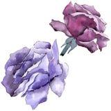 ζωηρόχρωμος αυξήθηκε Floral βοτανικό λουλούδι Άγριο φύλλο άνοιξη wildflower που απομονώνεται απεικόνιση αποθεμάτων