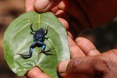 Ζωηρόχρωμος βάτραχος της Μαδαγασκάρης Στοκ Εικόνα