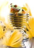 ζωηρόχρωμος βάτραχος Στοκ φωτογραφία με δικαίωμα ελεύθερης χρήσης