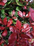 Ζωηρόχρωμος βγάζει φύλλα την άνοιξη στοκ φωτογραφίες