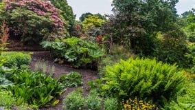 Ζωηρόχρωμος βρετανικός κήπος ν Σάσσεξ, Αγγλία κάστρων Στοκ Εικόνες