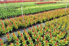 ζωηρόχρωμος βρεφικός σταθμός λουλουδιών πεδίων Στοκ Εικόνα