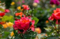 Ζωηρόχρωμος γαλλικός κήπος Στοκ φωτογραφία με δικαίωμα ελεύθερης χρήσης