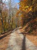 Ζωηρόχρωμος δασικός δρόμος το φθινόπωρο Στοκ φωτογραφία με δικαίωμα ελεύθερης χρήσης